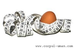 Dieta cu albus de ou