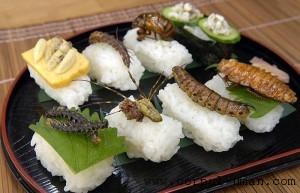 Insecte comestibile