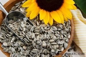 Seminte floarea soarelui contraindicatii