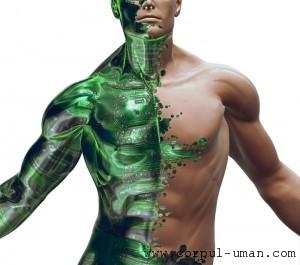 Metalele grele din organism