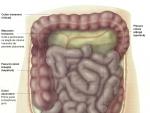 Jejunul şi ileonul – Corpul Omenesc