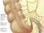 Cecul şi apendicele – Anatomia corpului uman