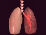 Plamanii – Corpul uman organe interne