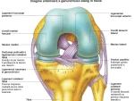 Ligamentele şi bursele genunchiului