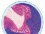 Embriologia ovarului