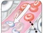 Circuitul oxigenului in corpul omenesc