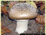 Intoxicatiile cu ciuperci