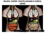 Legumele si fructele si impactul lor asupra corpului uman (video)