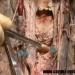 Digestia (video)