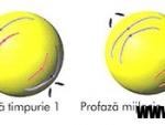 Nucleul