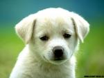Ce pot face animalele de companie pentru sanatatea ta?