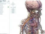 Corpul uman si calitatile sale incredibile