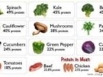 Proteine vegetale si sursele lor