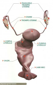 Ovarele