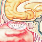 sistemul-olfactiv