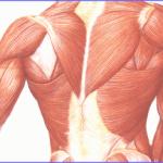 Tesutul muscular