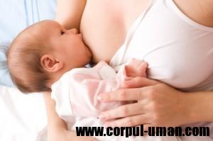 Laptele matern si colostrul