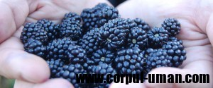 Fructe sanatoase toamna