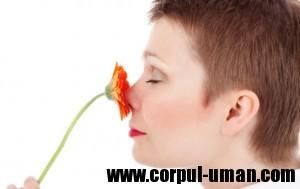 Olfactoterapia - Terapie prin miros
