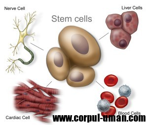 Tratament celule stem