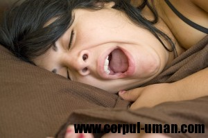Lipsa somnului ingrasa