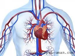 Lipici inima