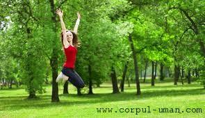 Gimnastica verde