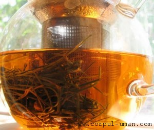Ceai din ace de pin