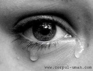 Importanta lacrimilor